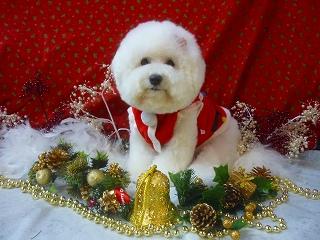 elise christmas2